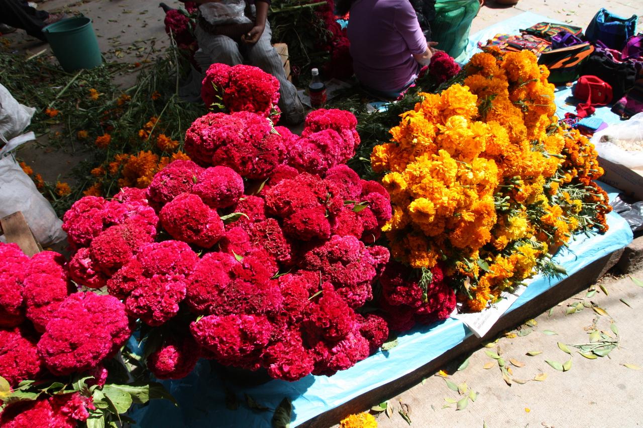 Oferta flowers